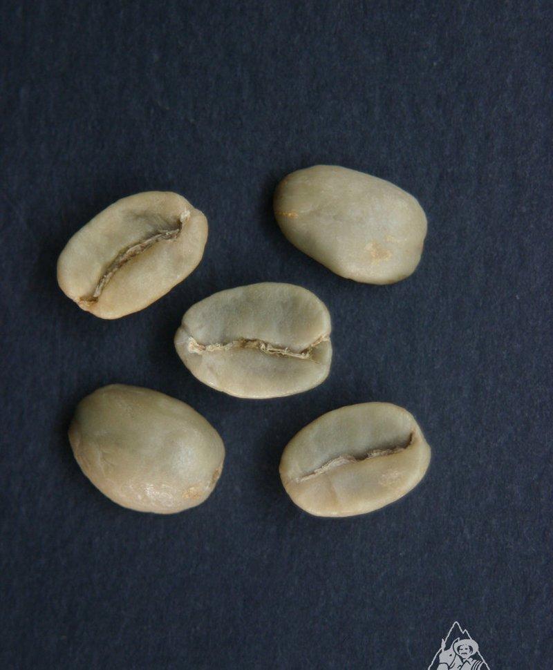 растение дефекты кофе фото расшифровывает код выдает