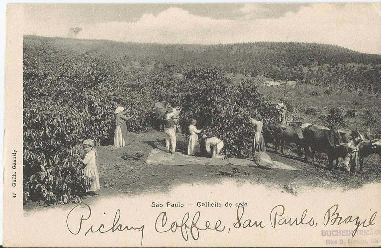 san-paulo-coffee-history